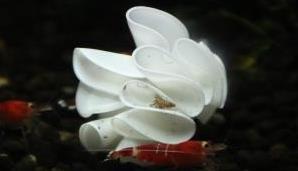 Baby-Shrimp-Shelter-kl2-_______-1