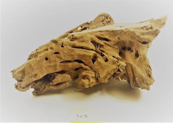 Mangroven Wurzelholz Nr. 43