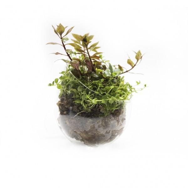 Plant Pott Glas