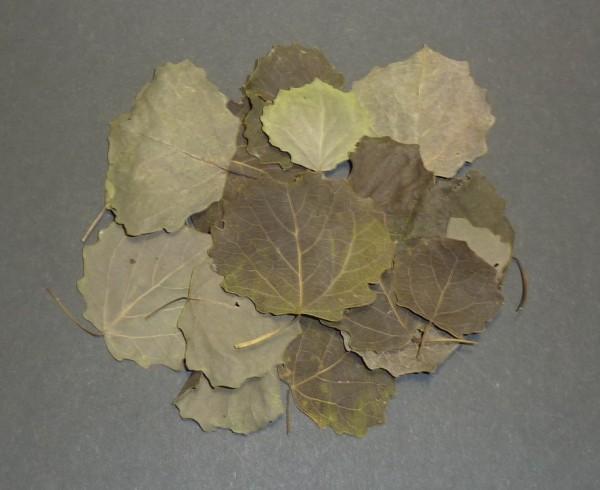 CSF Espenlaub einzeln 15 Blätter