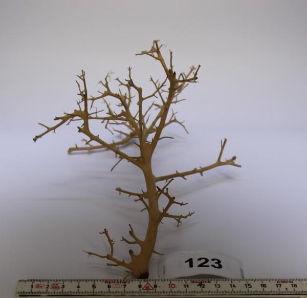 Branch Nano Driftwood 123