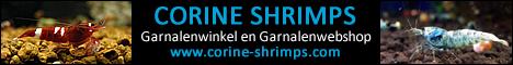 banner-468-60-corine-shrimps