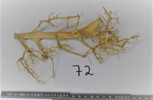 Branch Nano Driftwood 72