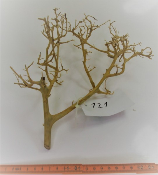 Branch Nano Driftwood Nr. 121