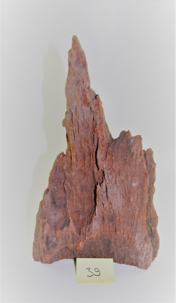 Mangroven Wurzelholz Nr. 39