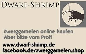 Dwarf-Shrimp