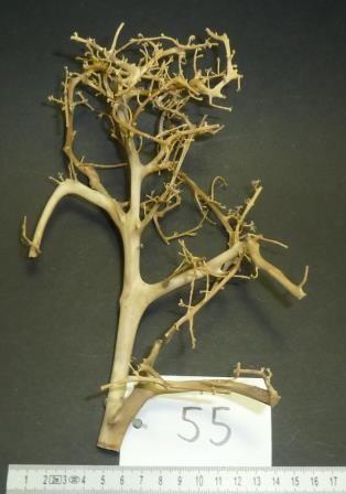Branch Nano Driftwood 55