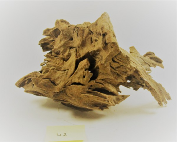Mangroven Wurzelholz Nr. 42