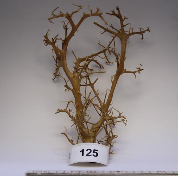 Branch Nano Driftwood 125