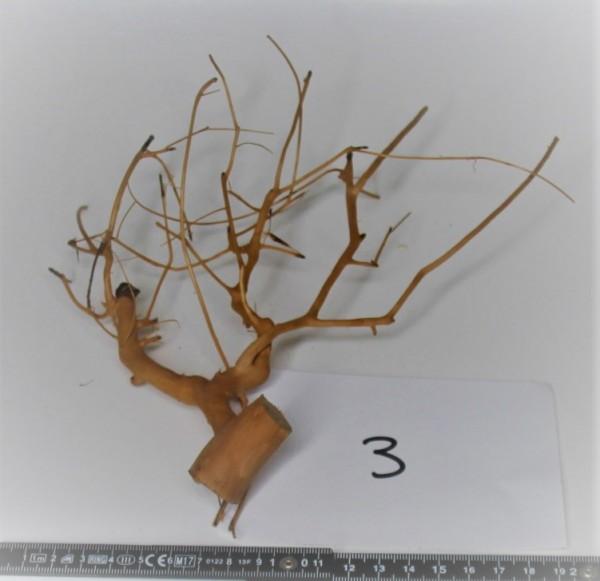 Branch Nano Driftwood 3